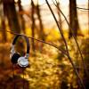 Nature___Seasons___Autumn_The_headphones_on_autumn_bush_046323_