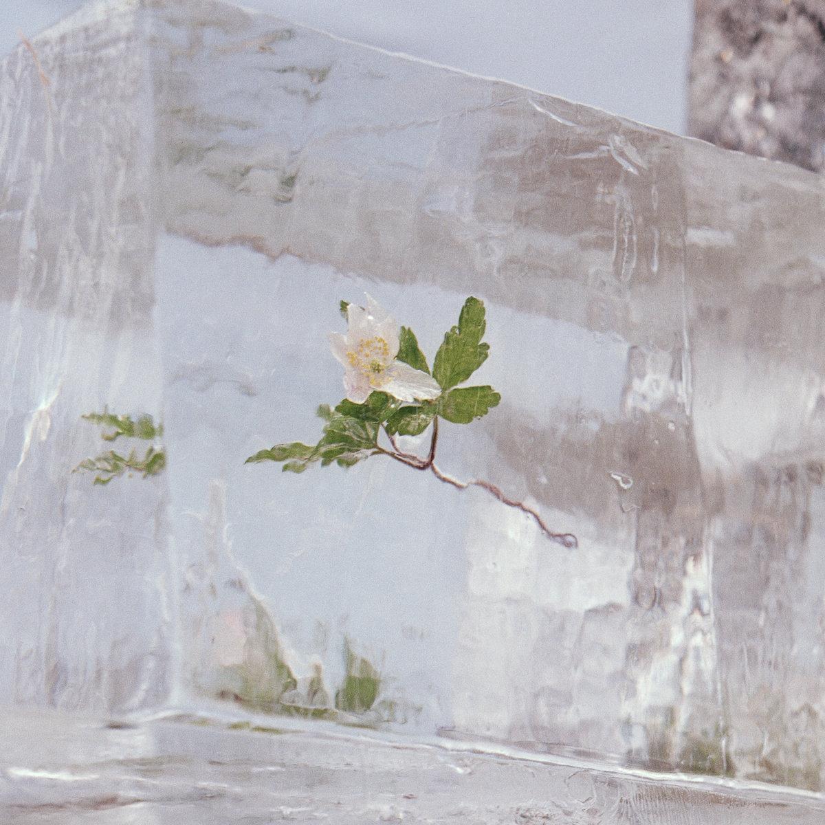 """Danai """"Efterklang"""" pristato naują albumą """"Windflowers"""""""