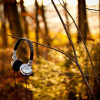 Nature___Seasons___Autumn_The_headphones_on_autumn_bush_046323_